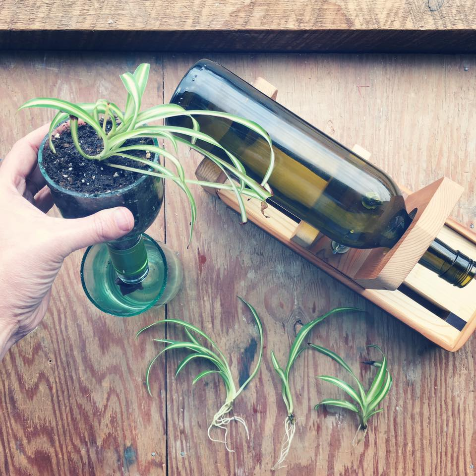 wine bottle reuse