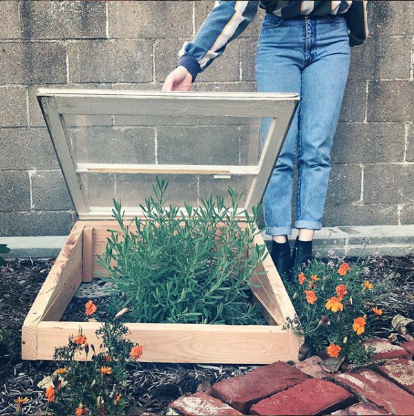 displays a handmade coldframe